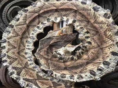养蛇活体饵料高产技术——黑豚养殖技术(二)