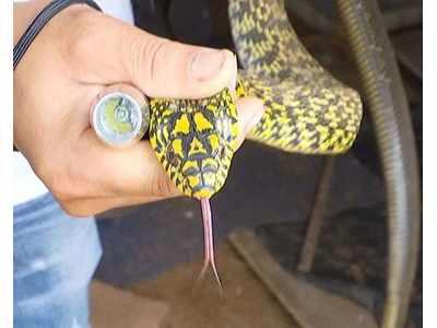 一年四季不冬眠的蛇
