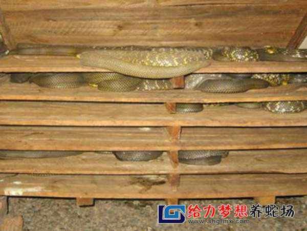 东养蛇场_养蛇公司