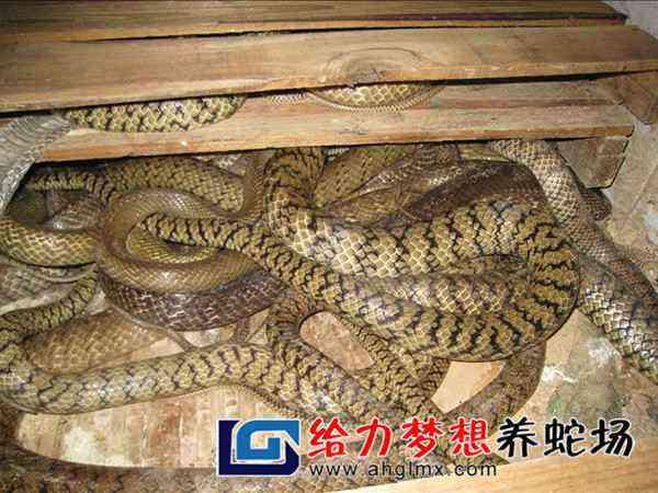 广西养蛇培训基地