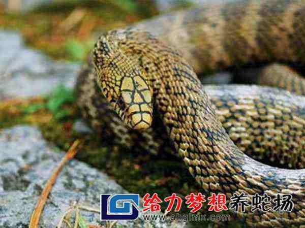 湖南养蛇基地
