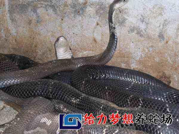 养蛇技术培训