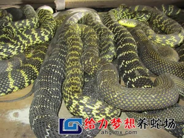 东养蛇场_未来10年养蛇前景如何