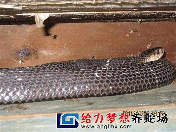 东养蛇场_养蛇人工料是塑料吗