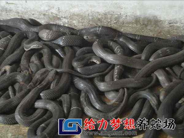养蛇技术培训班