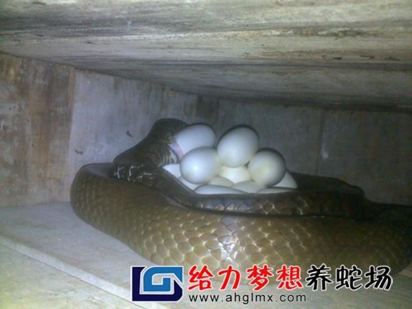 养蛇技术大全