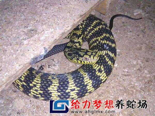 东养蛇场_养蛇可以不办手续行吗