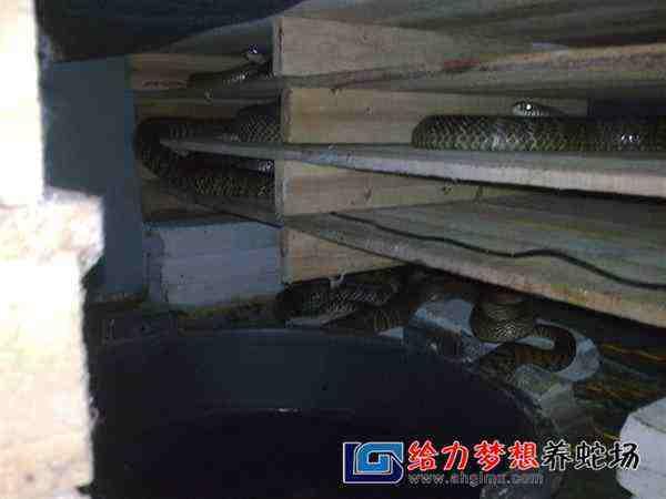养蛇培训班